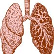 The Lungs and Large Intestine in Chinese Medicine